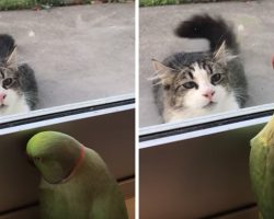Mom Saw Her Parakeet Doing Something Bizarre With A Neighbor's Cat And Had To Share It