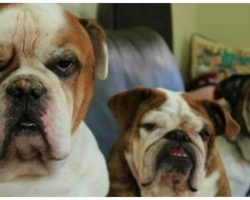 Reddit User Asks People What Rules Pets Demand Of Them, Answers Are Hysterical