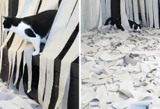Hidden Cam Films Epic Moment Cat Realizes A Room Is Filled With His Favorite Thing