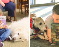 Program Lets Kids Read To Therapy Dogs To Beat Shyness & Improve Literary Skills