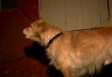 Rescue Dog Senses Danger In The Wall And Wakes Dad In The Middle Of The Night