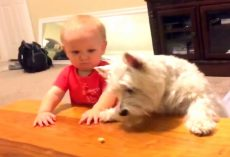 Dog & Baby Want The Last Piece Of Chicken, Dad Captures Their Ultimate Showdown
