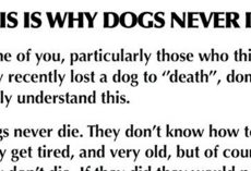 We Were Wrong All Along — This Is Why Dogs Never Actually Die