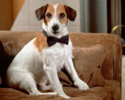 4 of the Most Interesting Dogs in History