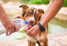 Dog Health 101 : How to Keep Your Dog Healthy