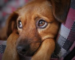 12 Things People Do That Annoy The Heck Out Of Dogs
