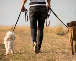 Preventing Dog Obesity: Tips to Make Your Canine Fit and Healthy