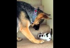 """Mom Warns Dog To """"Stay Away"""" From The New Kitten, But The Dog Refuses To Listen"""