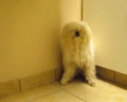 Molested Dog Knows What's Coming And Hides In The Corner When They Come Close