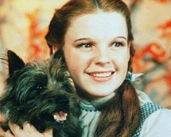 Dogs In History: Terry, The Wonderful Dog From Oz