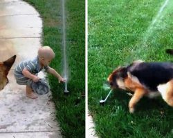 Nervous Dog Is Terrified Of Water Sprinkler But Baby Brother Shows Him It's Okay