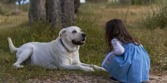Best Friends PAW-rever: 5 Kid-Friendly Dog Breeds Your Family Will Love