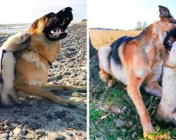 Woman Hoped Big Dog & Ferret Would Become Friends, But The Dog Opened Her Mouth