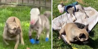 Tiniest Horse Lives In The House With All Of His Doggy Friends