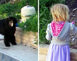 Mom Worries Why Large Dog Is Following Her Daughter, So She Takes A Closer Look