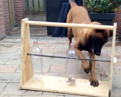 This Clever Dog Was Given A Treat Dispenser Toy And Figured It Out In Record Time!