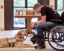Truly Man's Best Friend: The Numerous Benefits of Service Dogs