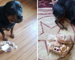Protective Rottweiler Finds And Guards Family's Bread Whenever They Leave The House