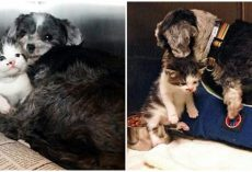 Homeless Dog Finds A Stray Kitten On The Streets, Nurses Her & Saves Her Life
