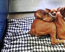 Nobody Wanted To Adopt Bonded Dogs Together, But One Photo Caught People's Eye