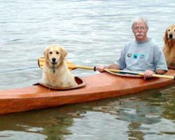 Retired Surgeon Builds A Special Kayak So He Could Take His Dogs On Adventures