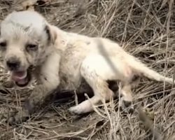 Tiny Puppy Abandoned In A Field All Alone Feels Love For The First Time