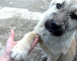 Puppy Abandoned On A Busy Road Offers His Paw Asking To Be Rescued