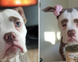 Dog With Giant Eyebrows Always Looks Like A Very Sad Clown