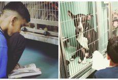 10-Year-Old Boy Reads To Shelter Dogs Every Weekend To Comfort Them