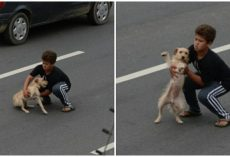 11-Year-Old Boy Races Out And Stops Traffic To Rescue Dog Hit By Car