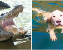 74-Year-Old Woman Fights Off Alligator To Save Her Beloved Pup