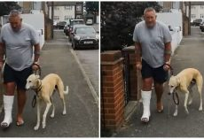 Man Takes $400 Trip To Vet, Learns His Limping Dog Was Just Imitating Him Out Of Sympathy