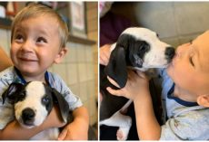 Boy Born with Cleft Lip Finds & Adopts Rescue Puppy with Same Condition