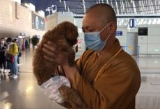 Buddhist Monk Dedicates His Life To Rescuing Thousands Of Stray Dogs