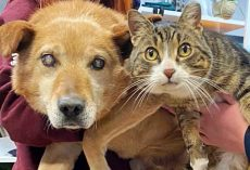 Cat Has Been Leading The Way For His Blind Doggy Brother For The Past 8 Years