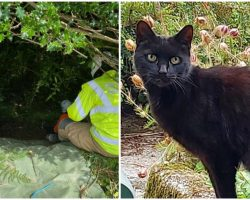 Cat's Meows Alert Rescuers To Missing 83-Year-Old Owner Who Fell Down a Ravine