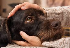 Dog Mental Health Matters: How to Keep Your Dog Healthy