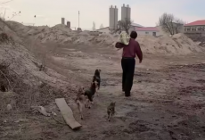 Dog Rescue Story: Kind-Hearted Homeless Man Provides Shelter for 30 Stray Dogs