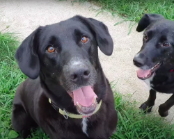 Dog Spent All Her Life in A Filthy Garage, Finally Rescued
