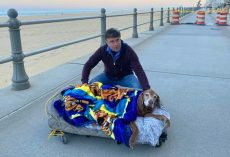 Family Builds Mobile Bed for 16-Year-Old Dog So She Can Visit Her Favorite Beach