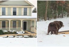 Family Builds Ramp Outside Their Home For Elderly Dog Just So She Can Enjoy The Backyard