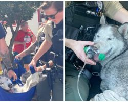 Firefighters Save Husky From 15th-Floor Of High-Rise Apartment Building On Fire