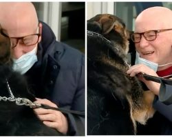 German Shepherd Reunited With Owner She Kept Alive During Stroke