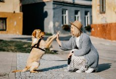 21 Ways To Be a Responsible Dog Owner