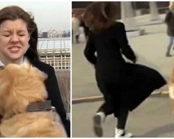 Golden Retriever Crashes Reporter's Live Newscast, Runs Off With Her Microphone