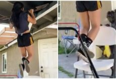 """Smart Dog Puts Chair Under Owner's Feet To """"Save Her Life"""" Seeing Her Struggle On Pull-Up Bar"""