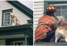 Dog Kisses Firefighter Who Rescued Him From Roof