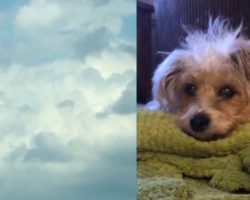Grieving Woman Looks Up Into The Clouds & Sees Her Dog's Face Hours After He Passed Away