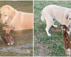 Hero Dog Paddles Out into Middle of Lake to Save a Baby Deer, and Makes a New Friend