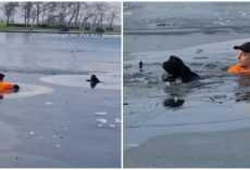 Heroic Jogger Jumps Into Frozen Lake To Rescue Stranger's Dog